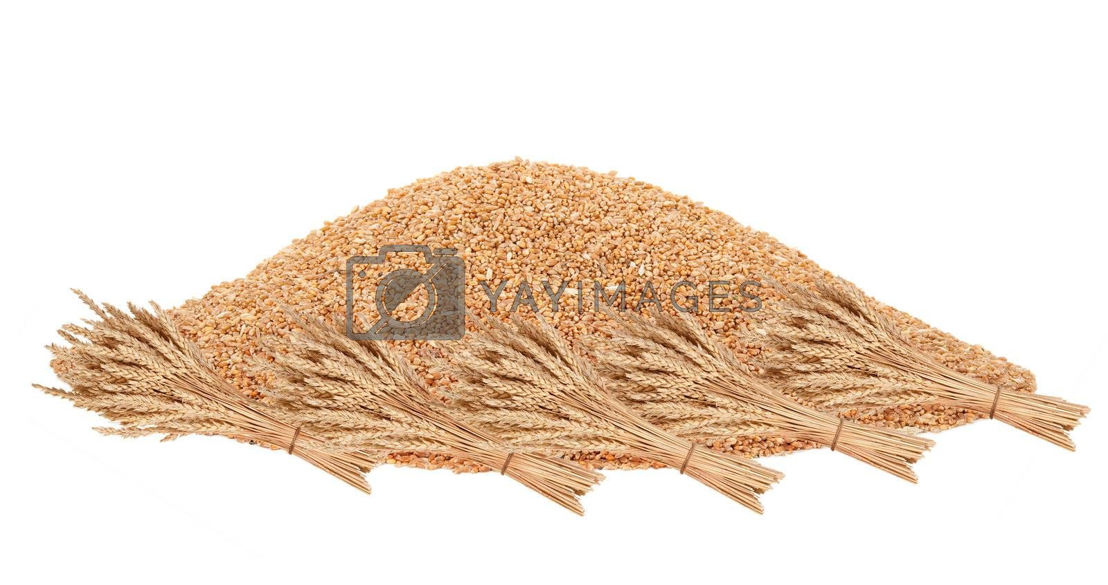 Big pile of grain with a sheaf of wheat