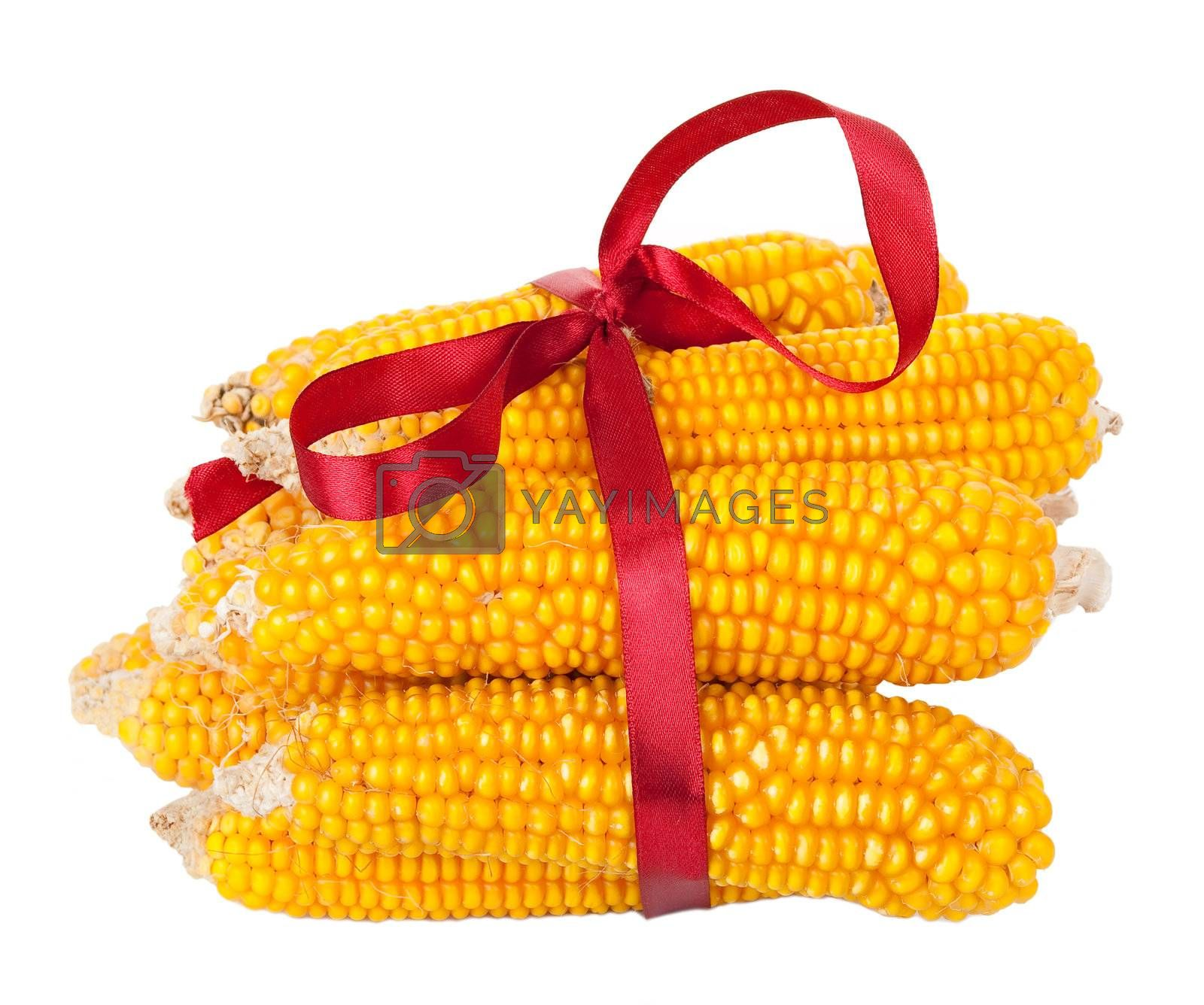 Ears of corn with red ribbon