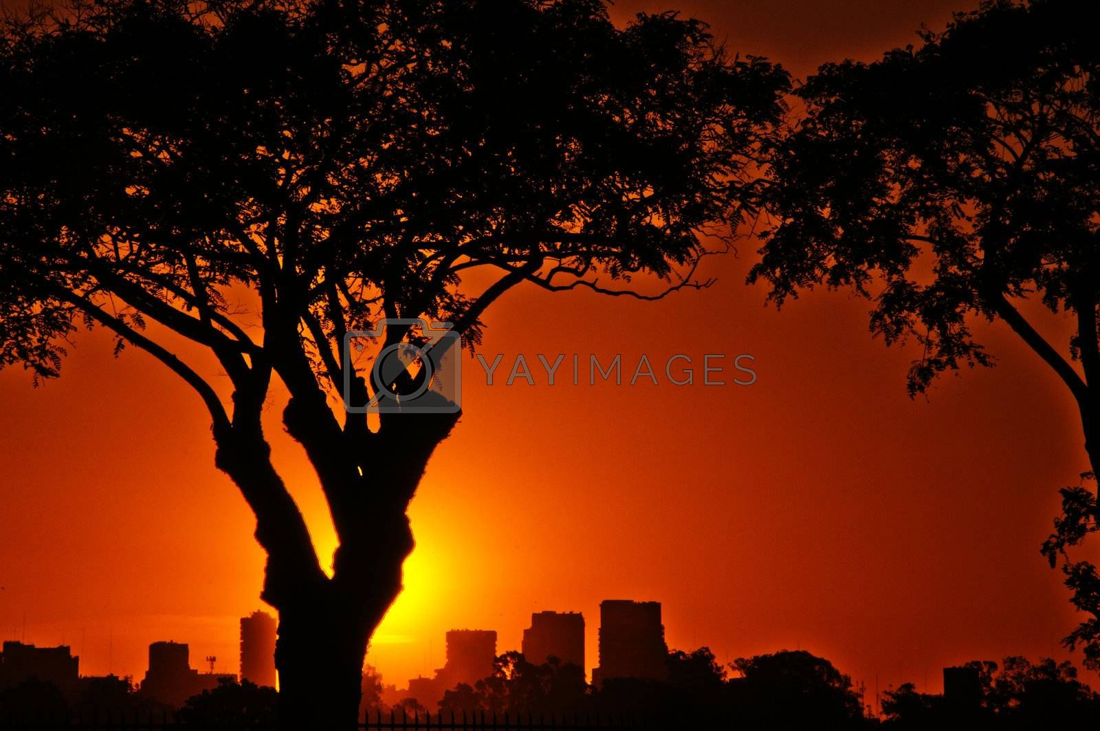 A vibrant summer sunset with trees in the foreground and Buenos Aires in the background.