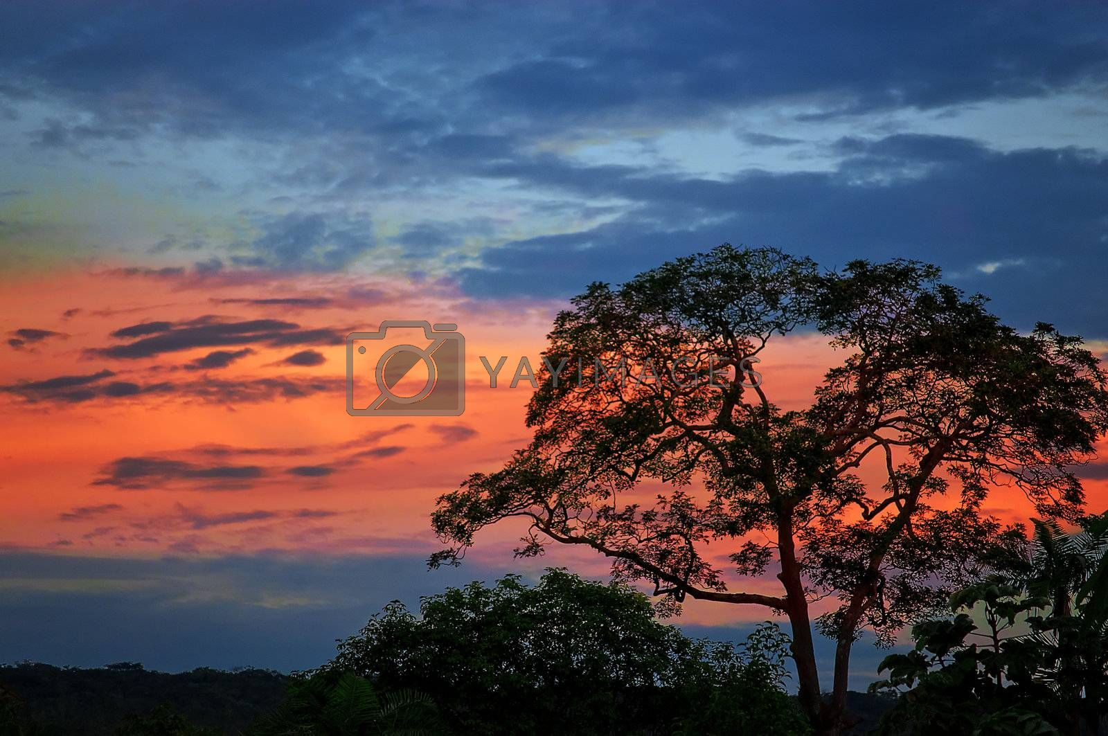 Dusk with a blue sky with a red band and the silhouette of a tree in the foreground.