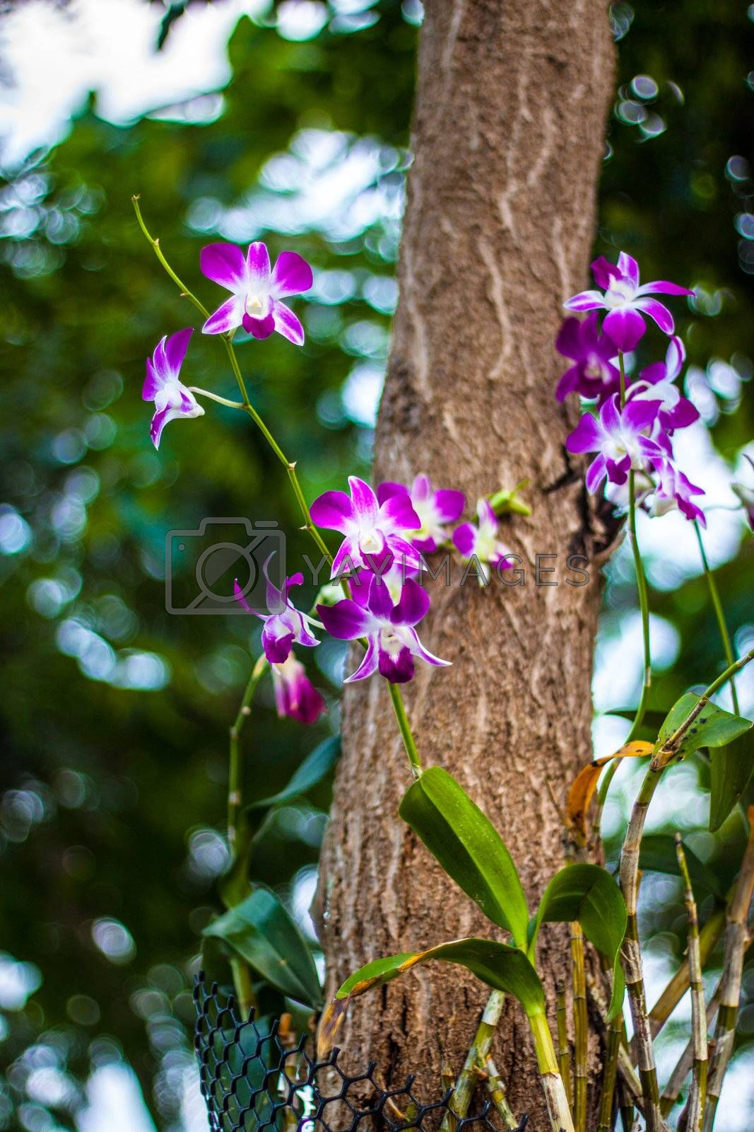 beautiful pink orchid with tree