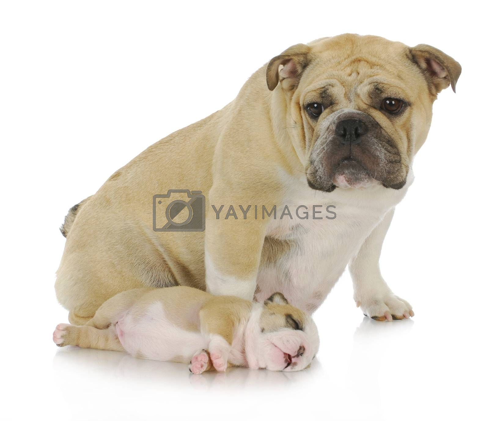 mother dog and her puppy -