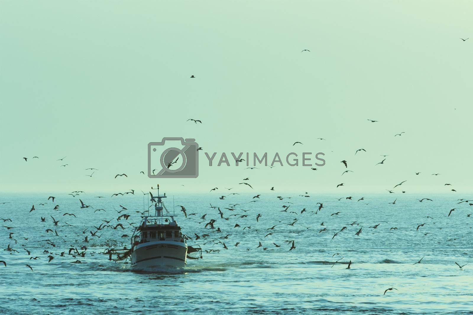 Fishing boat returning with lots of seagulls feeding at the rear of the boat