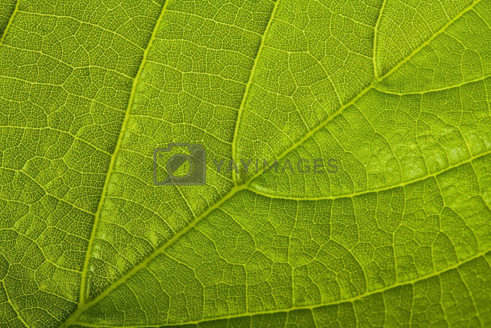 green leaf background, macro shot