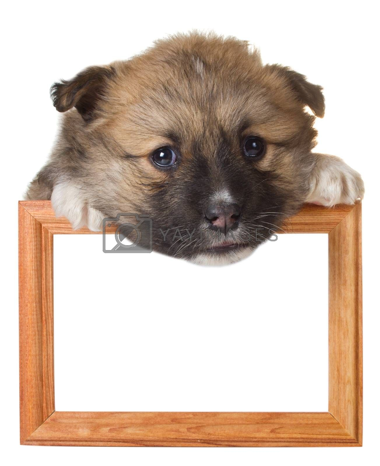 close-up puppy with frame, isolated on white