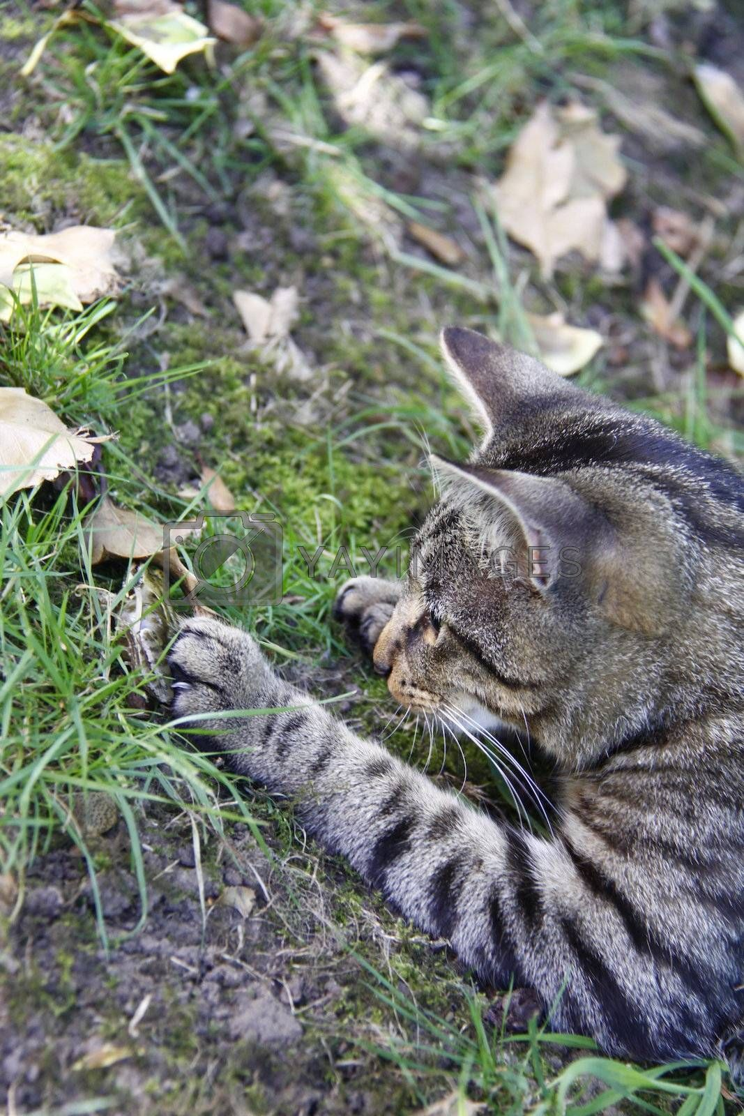 cat playing in the garden with a young toad