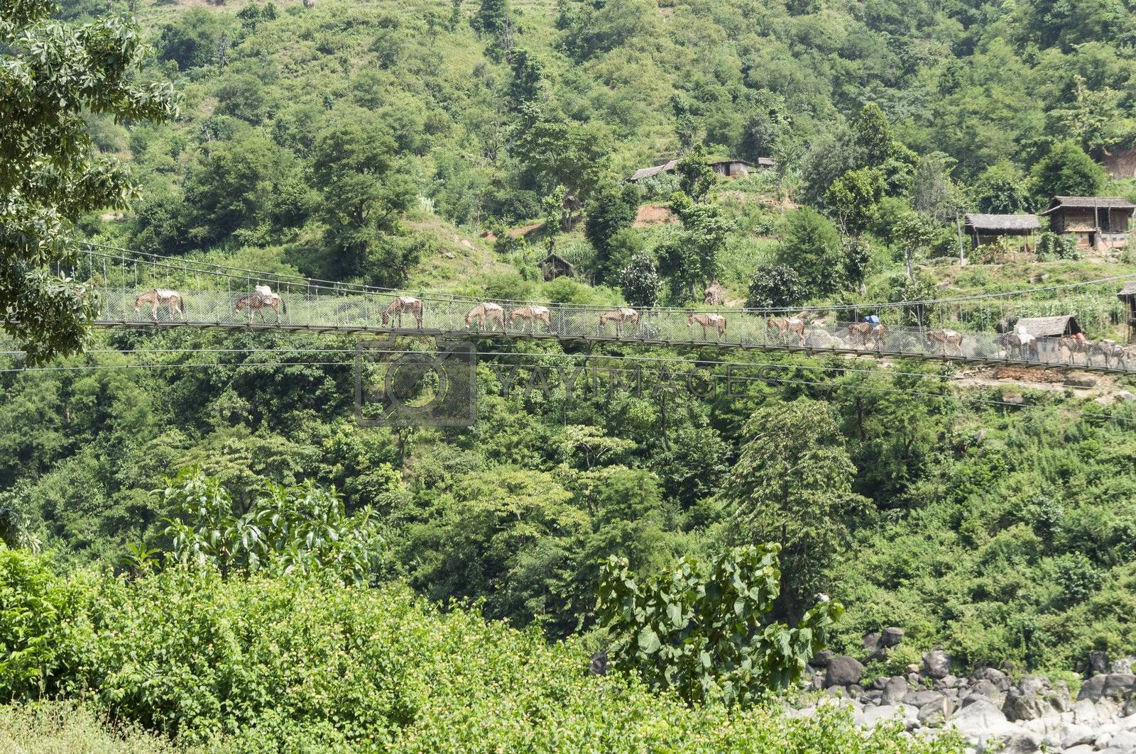 landscape with forest and bridge in nepal, asia