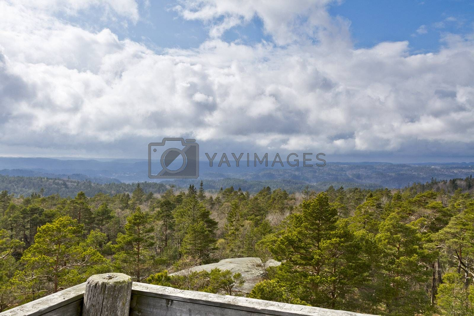 view over forest with cloudy sky - norway