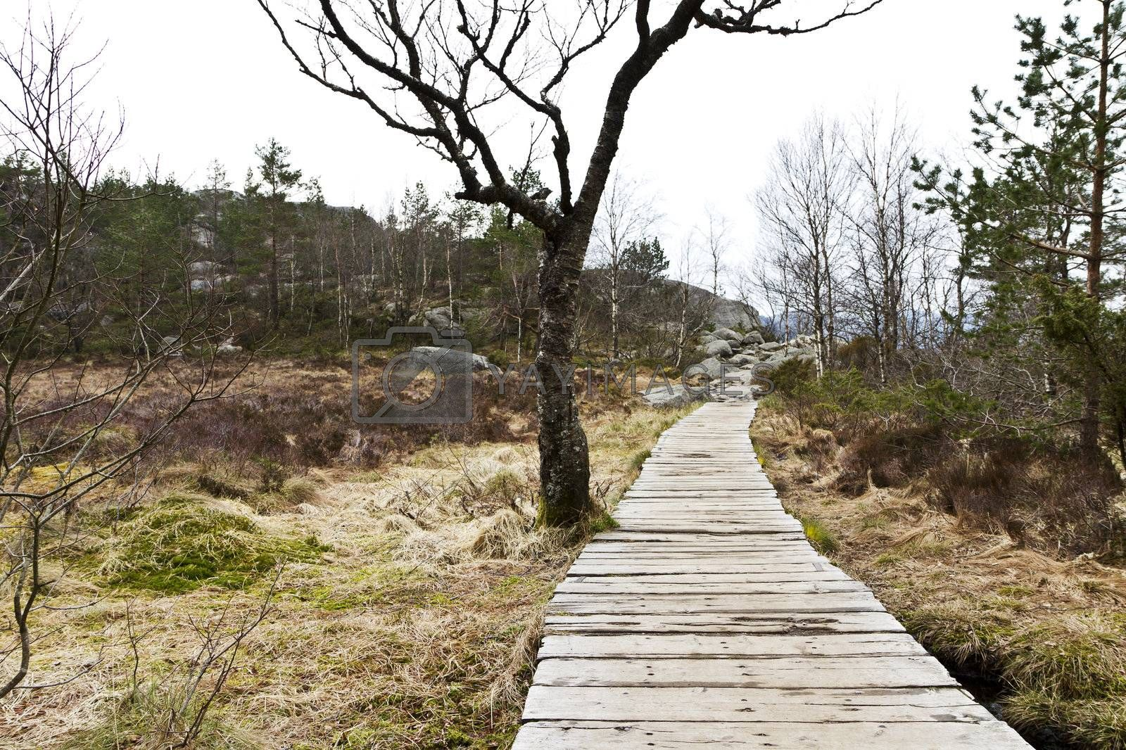 wooden foot path in rural landscape in norway