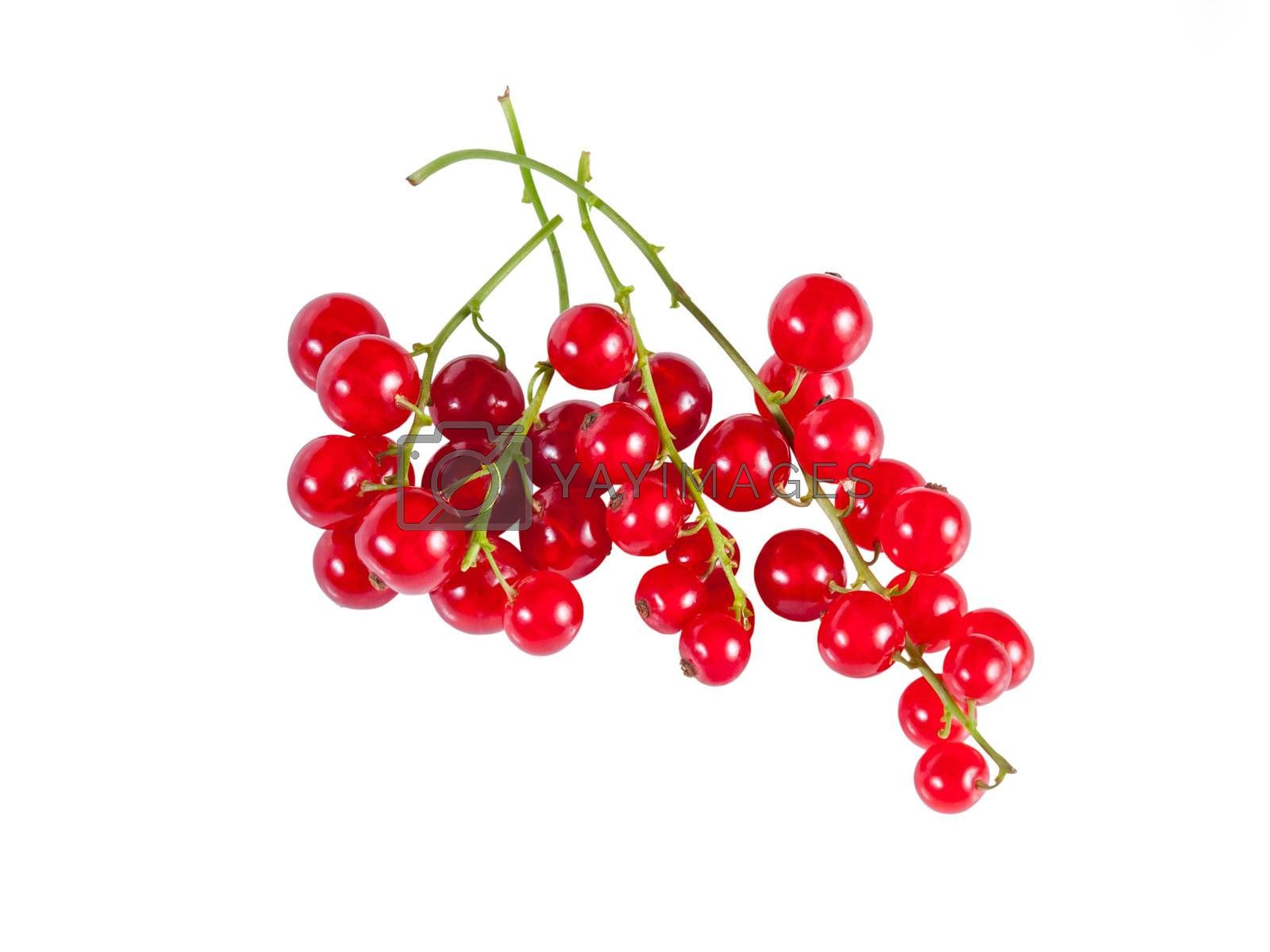 Berry red currants by firewings
