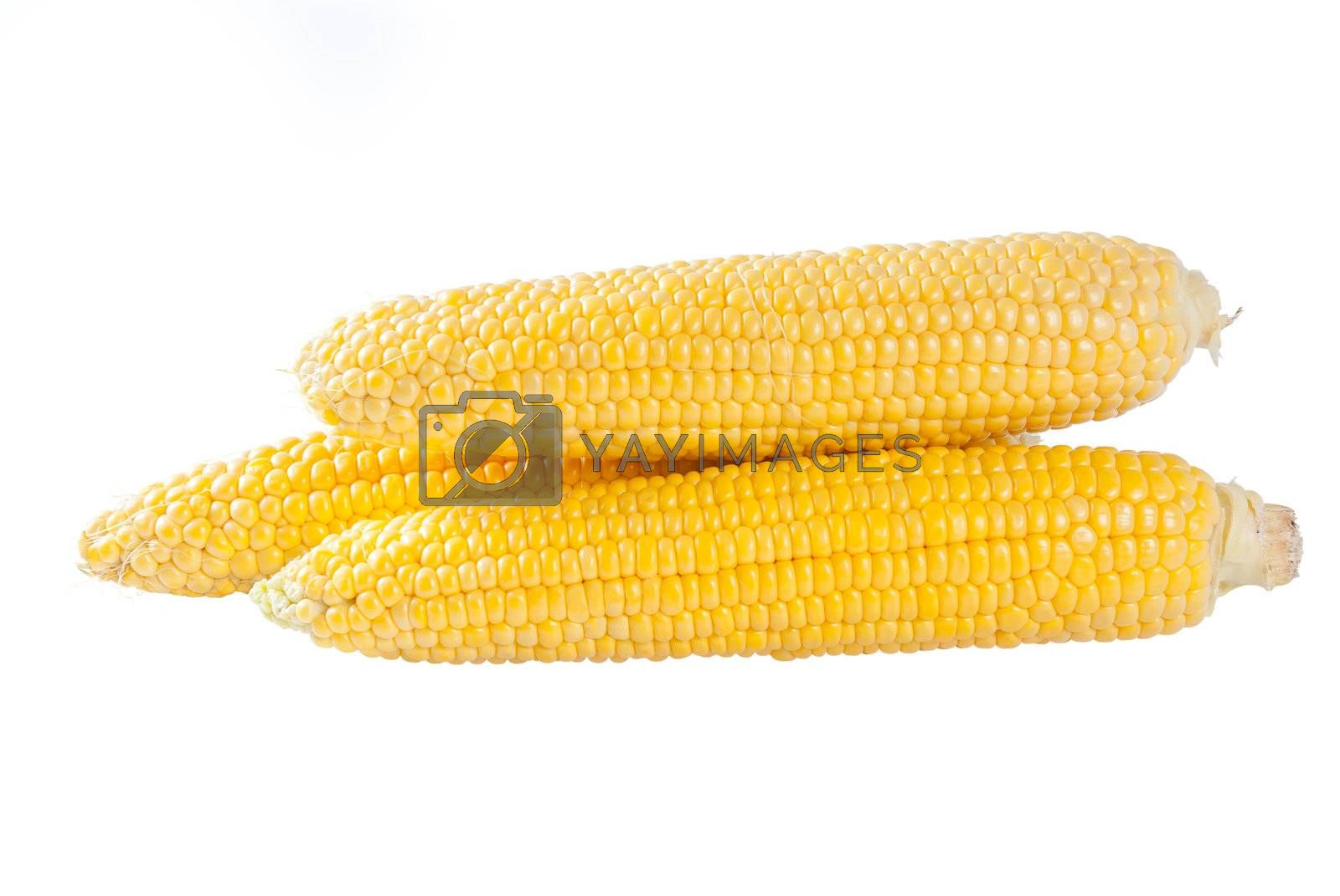 Ears of corn by firewings