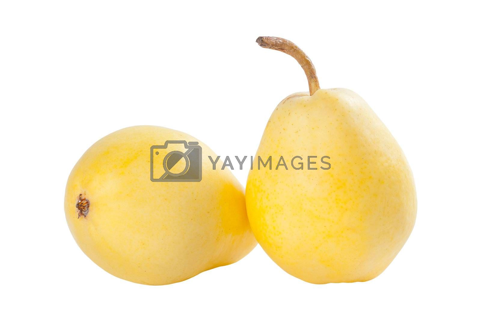 Two ripe yellow pears isolated on white background