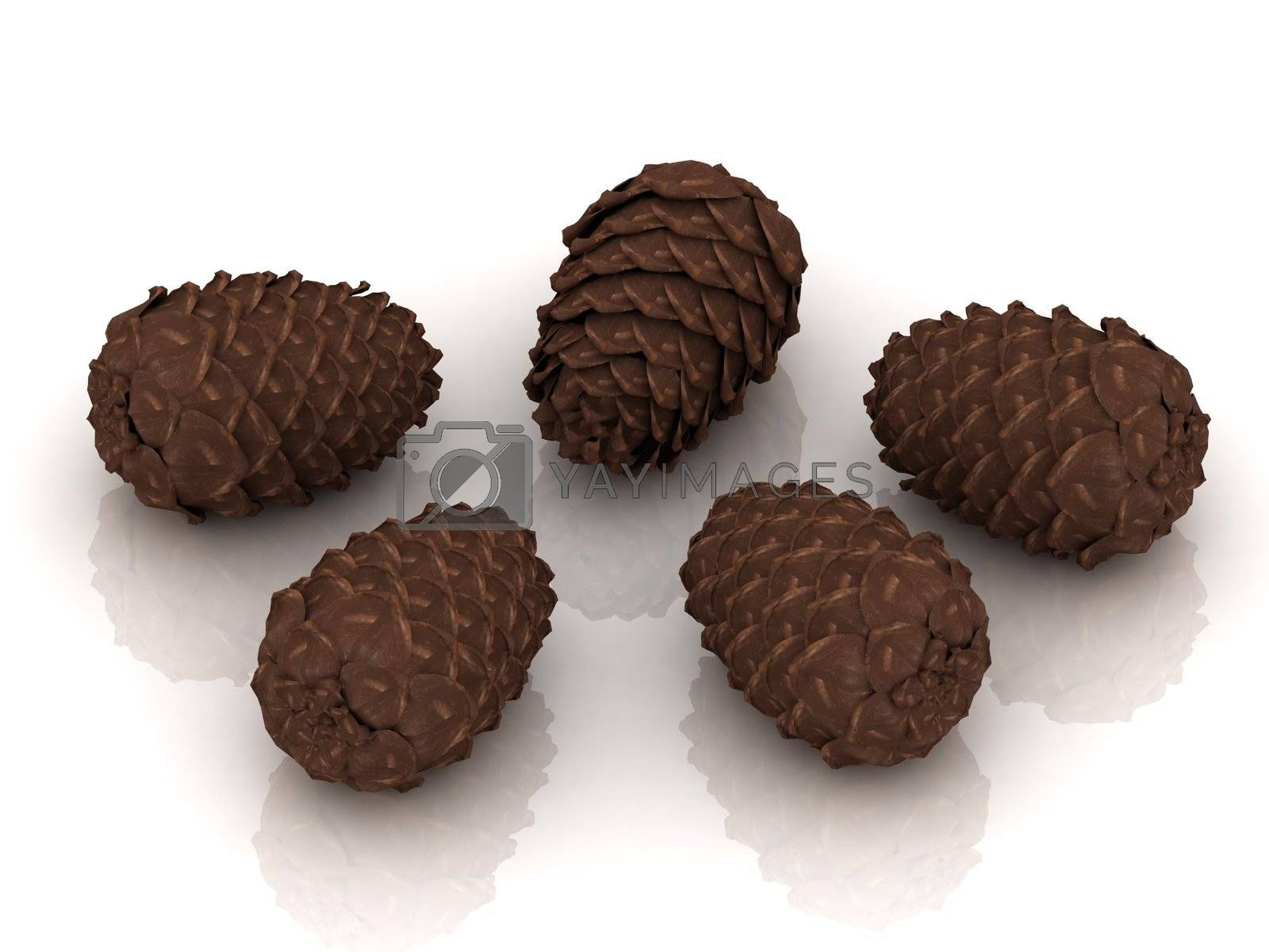 Five pine cones isolated on white background