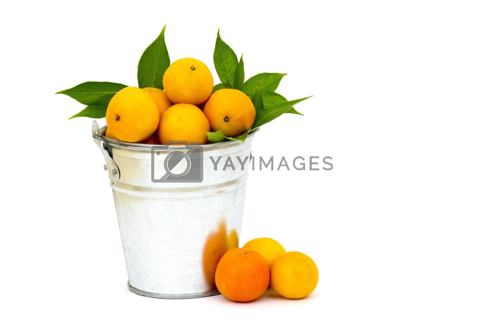 fresh tangerines in the bucket by miradrozdowski