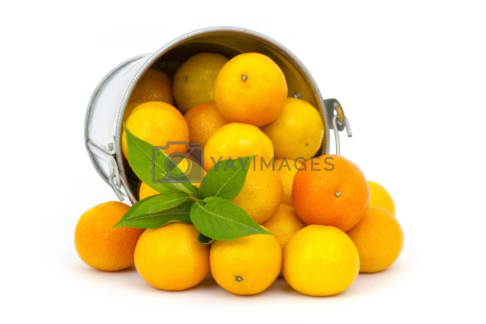 fresh tangerines on white by miradrozdowski