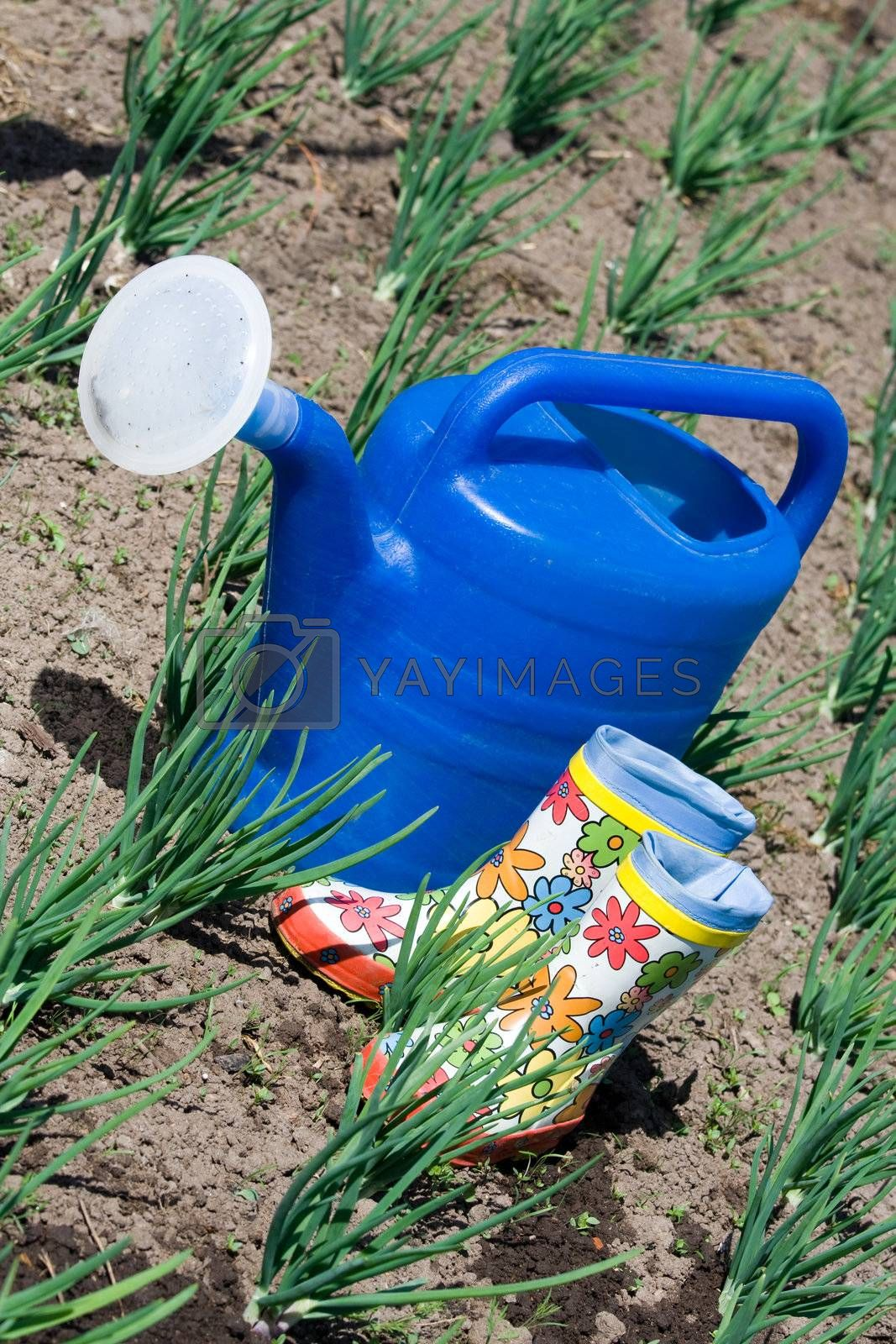 Watering can and rubber boots among onion on the vegetable garden