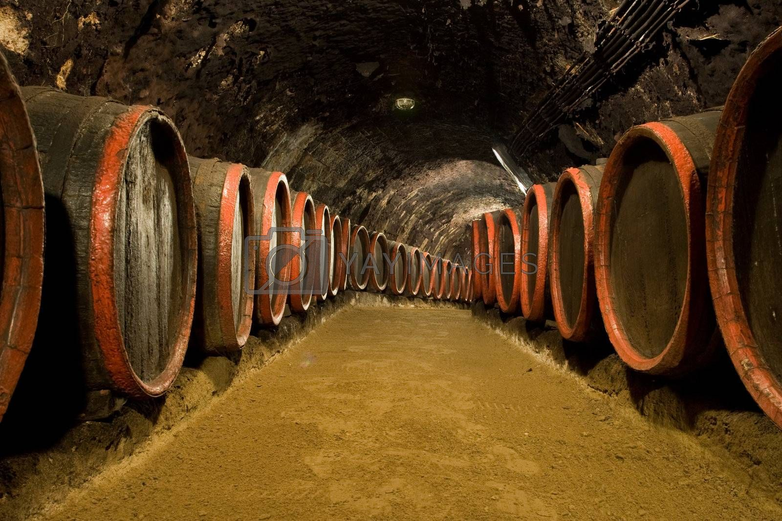 Old wine barrels are stored in winery cellar
