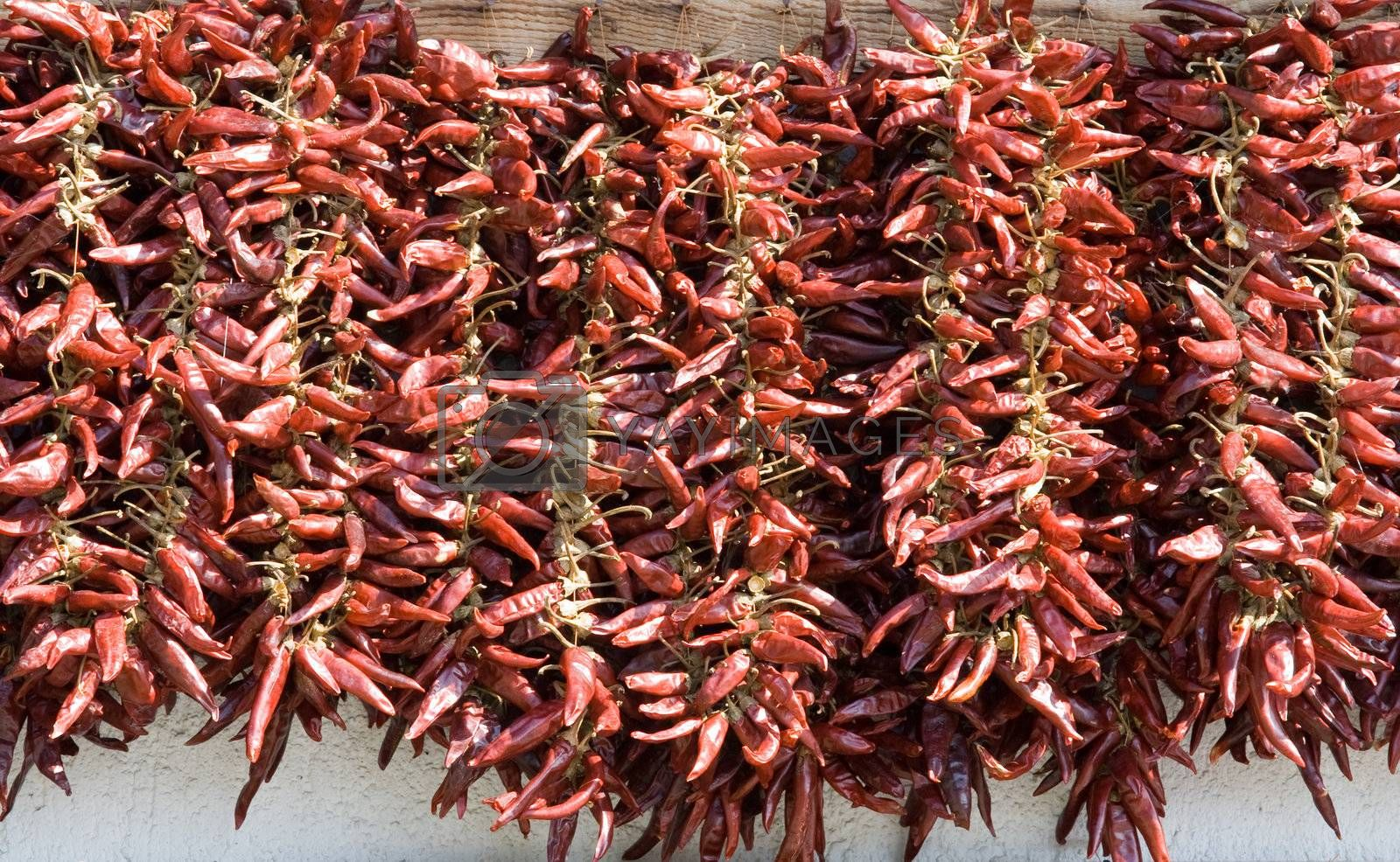 Bundles of dried red hot chili pepper in horizontal row on the white wall background