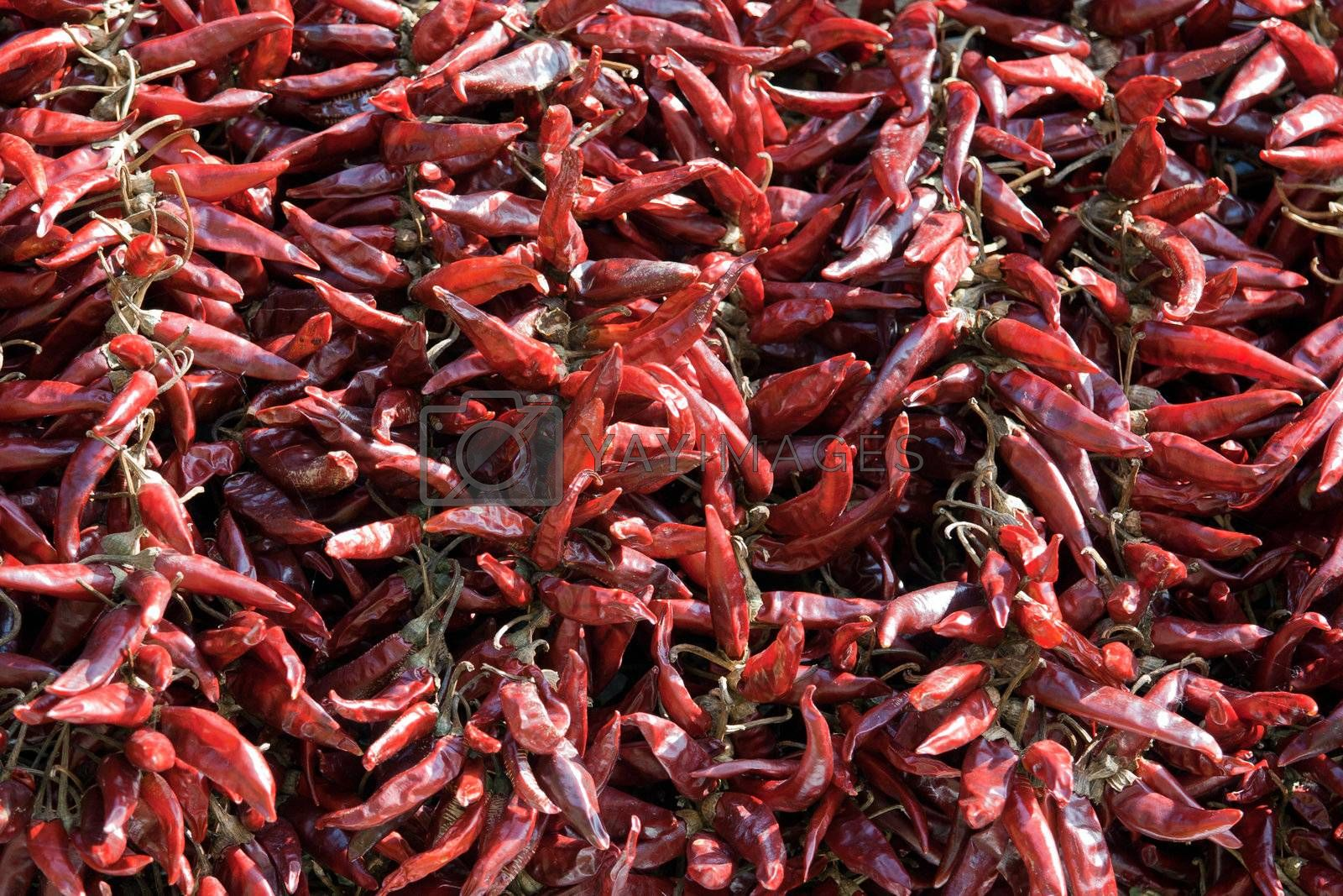 Bundles of dried red hot chili pepper