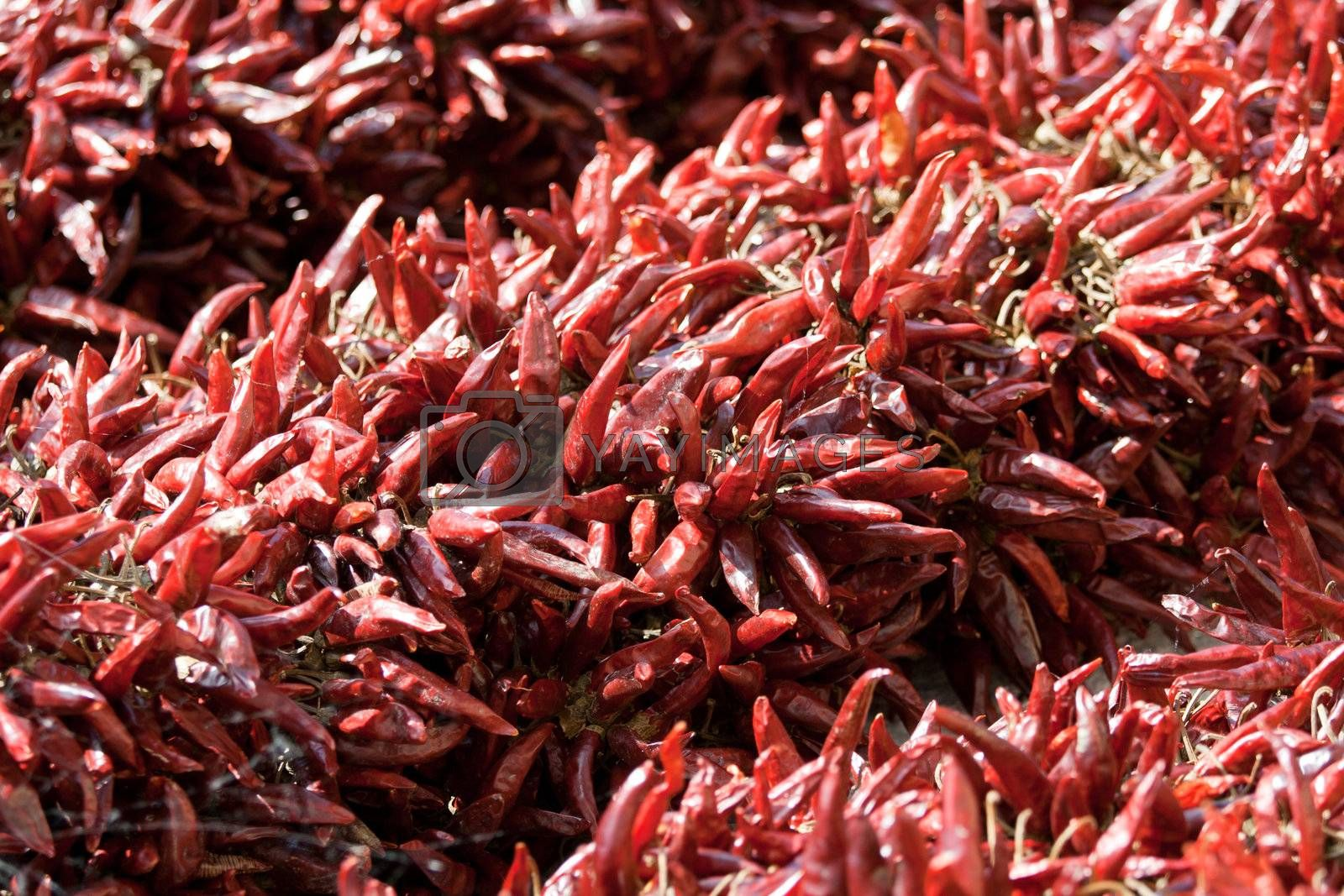 Bundles of dried red hot chili pepper on market