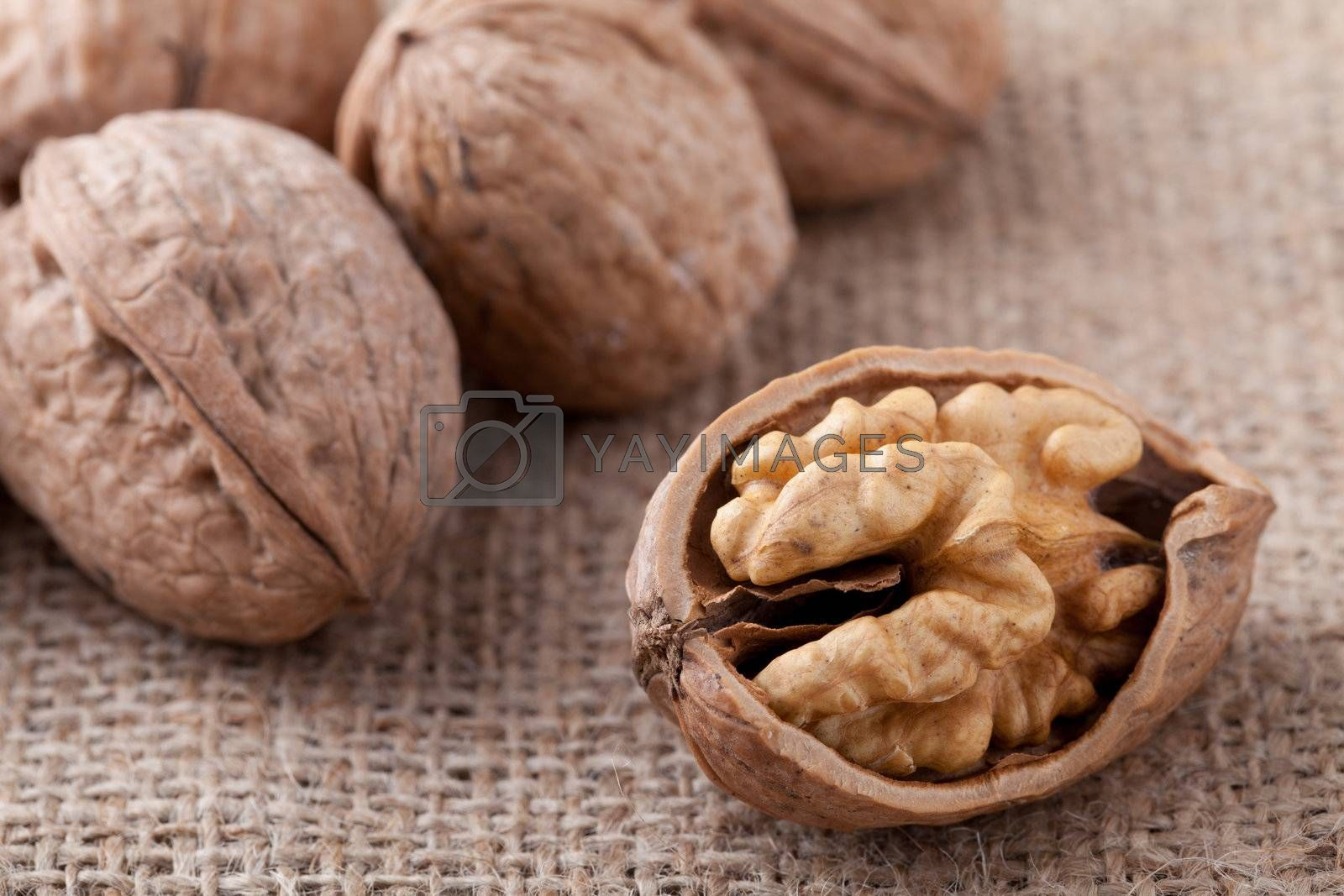 Cracked nut, kernel inside and Circassian walnuts on sackcloth b by SergeyAK