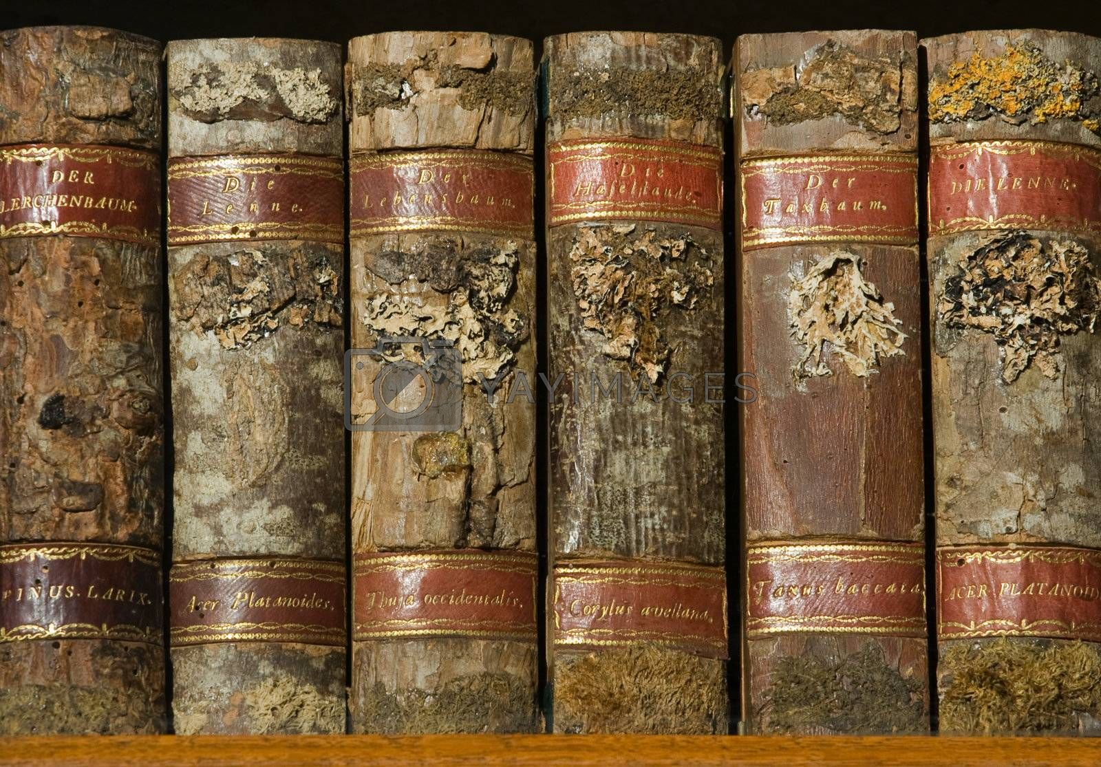 Xylotheca collection of wooden old books at the shelf in library