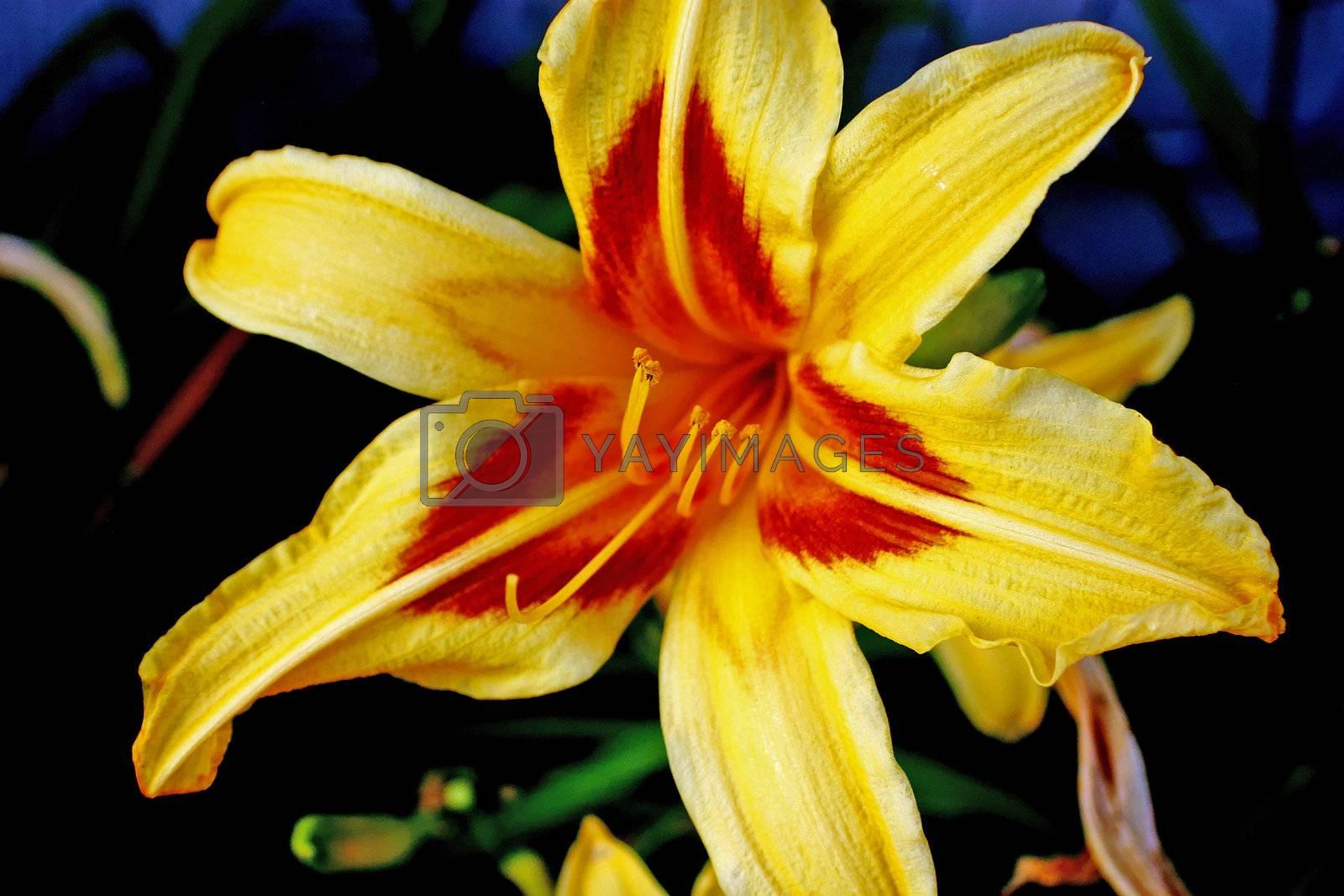 Details from golden Orchid flower from garden
