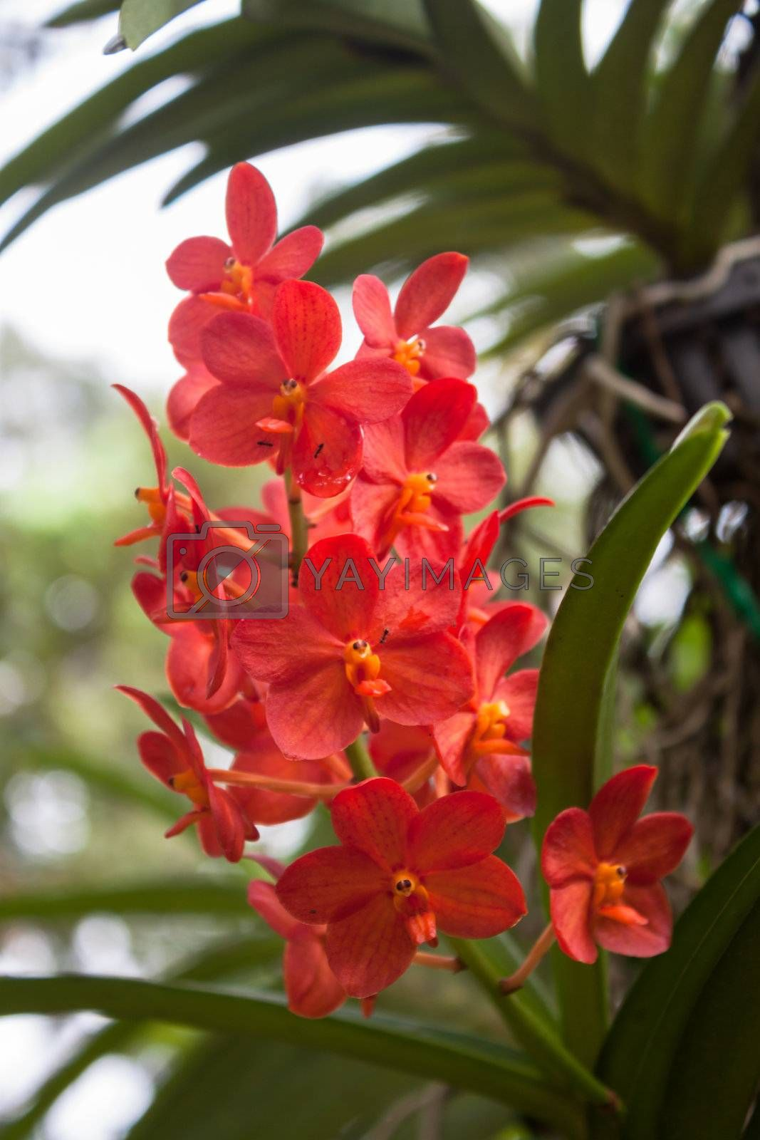 Bright Red Orchids with green leaves background