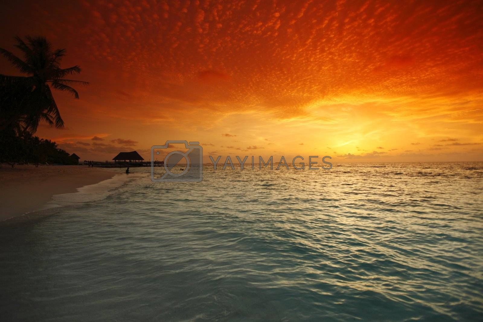 Beautiful view of sea and empty beach with palms on sunset
