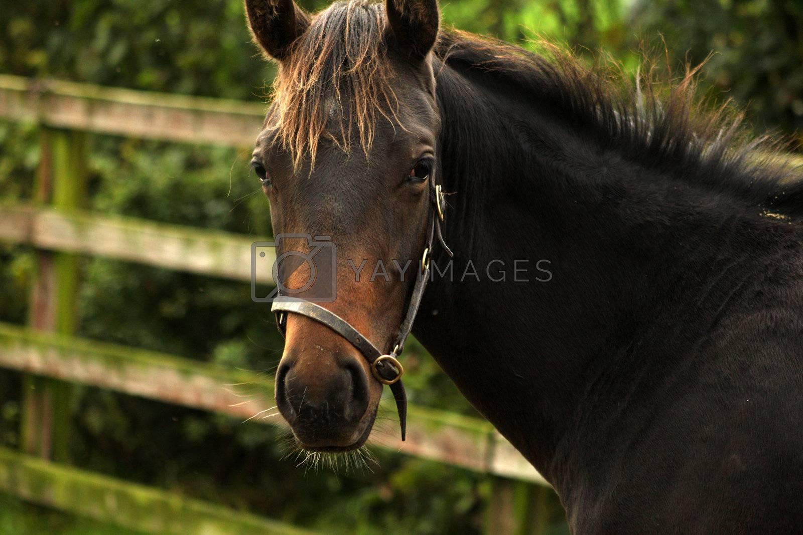 Thoroughbread horse in field in a close up shot