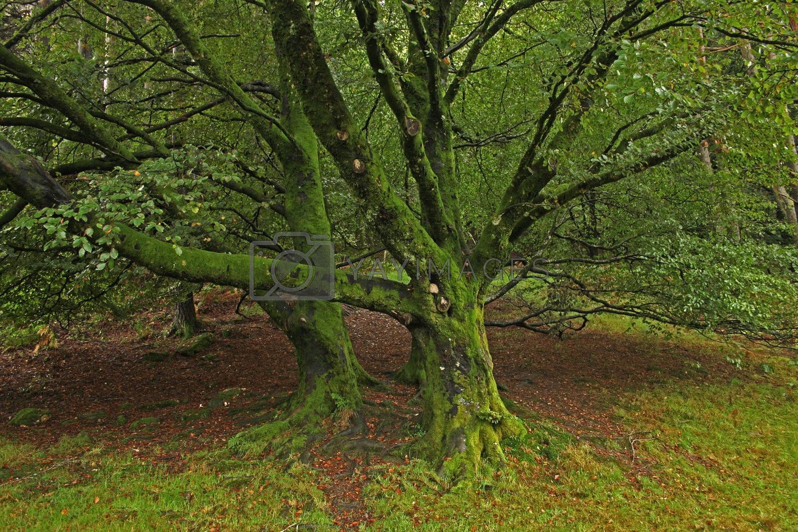 Old tree covered in green moss