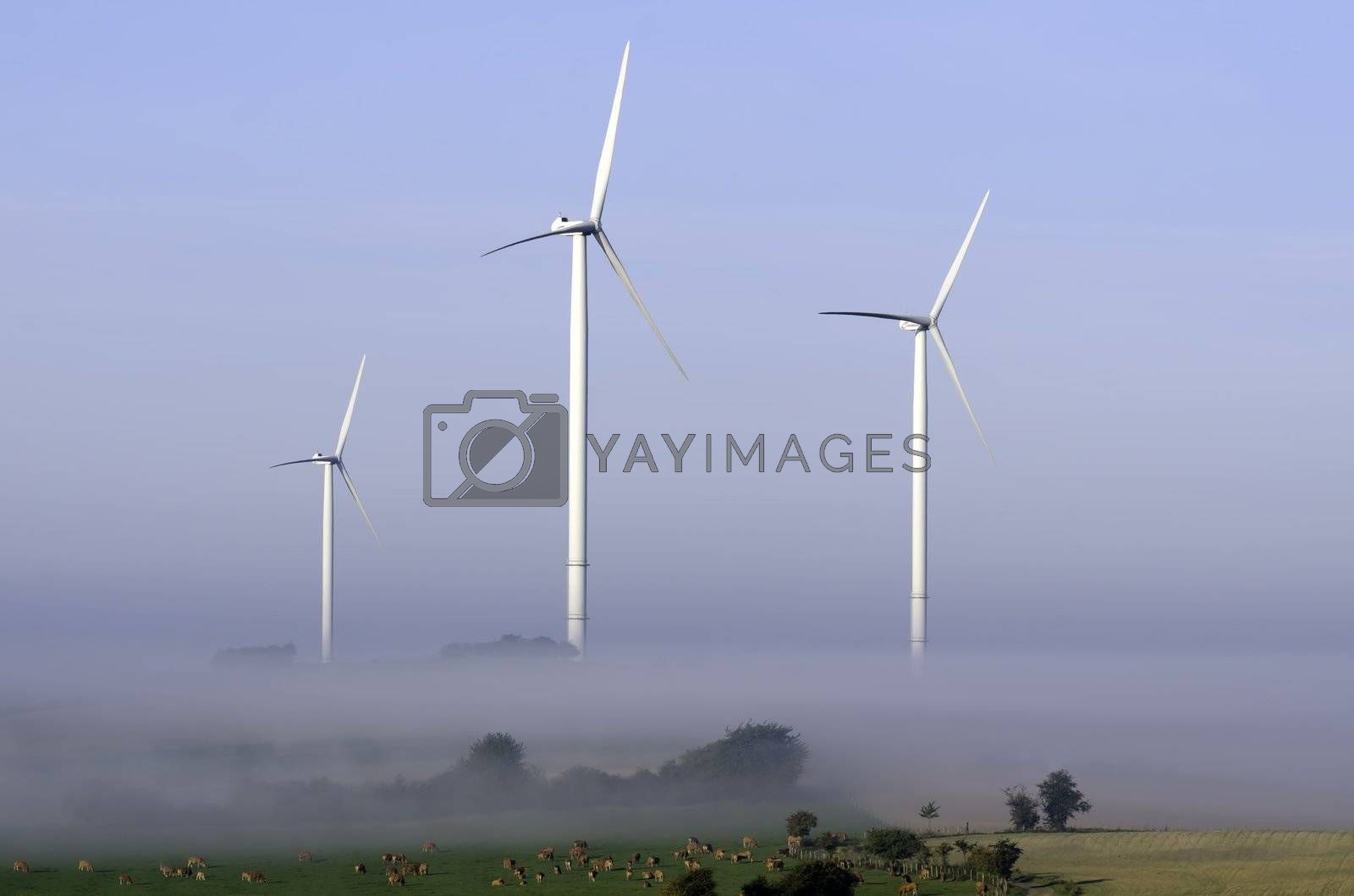 windturbines surrounded by fog in the countryside
