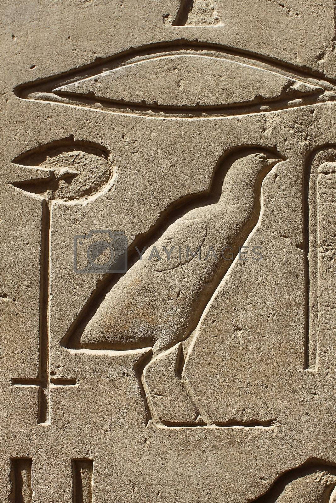 Ancient egypt images and hieroglyphics carved on the stone in the Karnak Temple, Luxor
