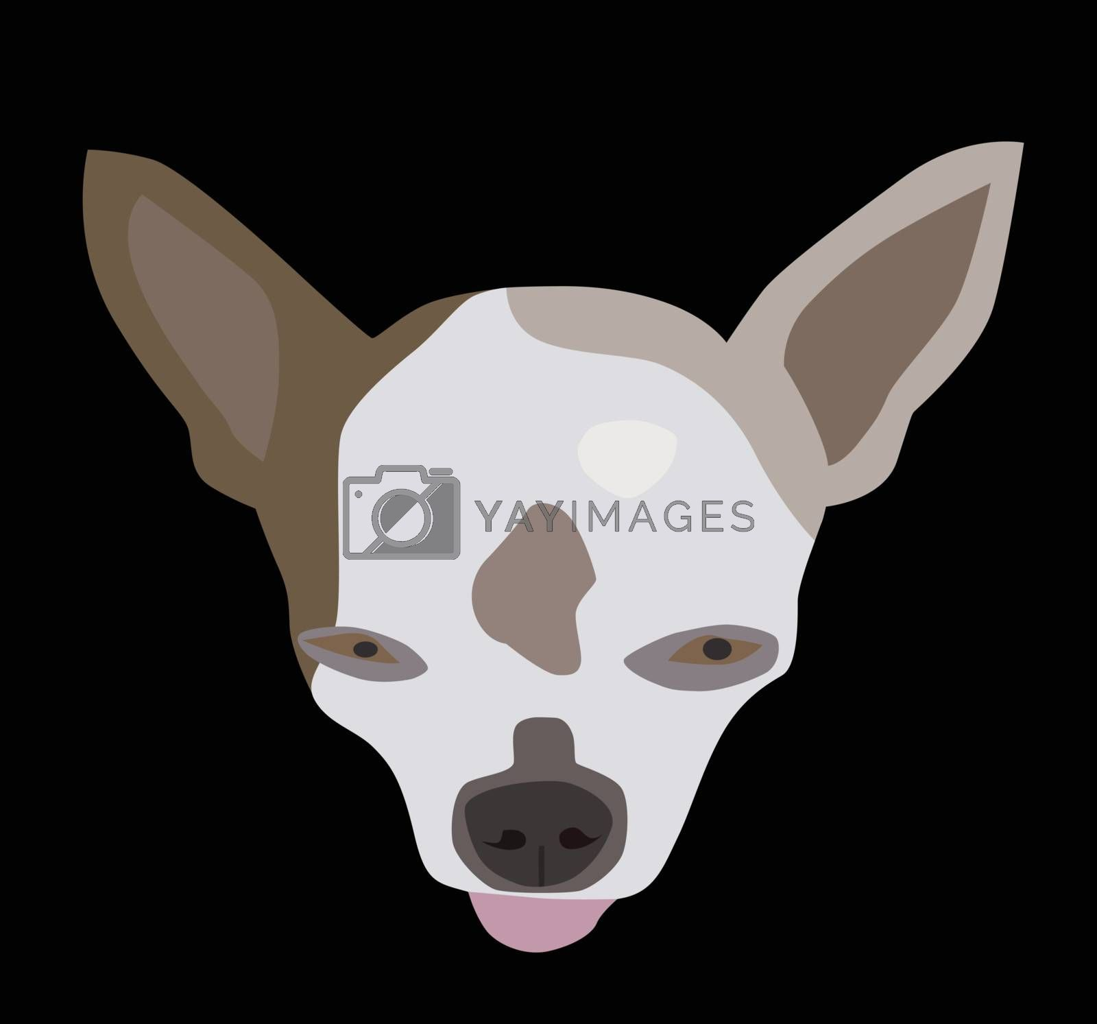 Vector illustration of chihuahua face