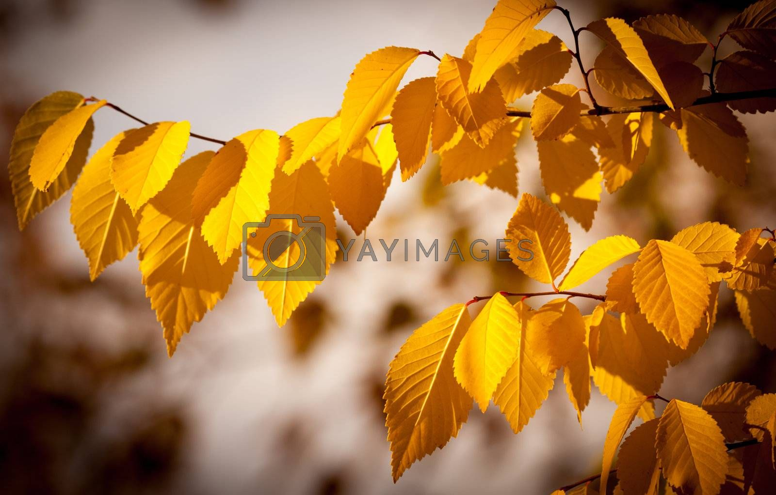 autumn gold, red and yellow leaves, fall