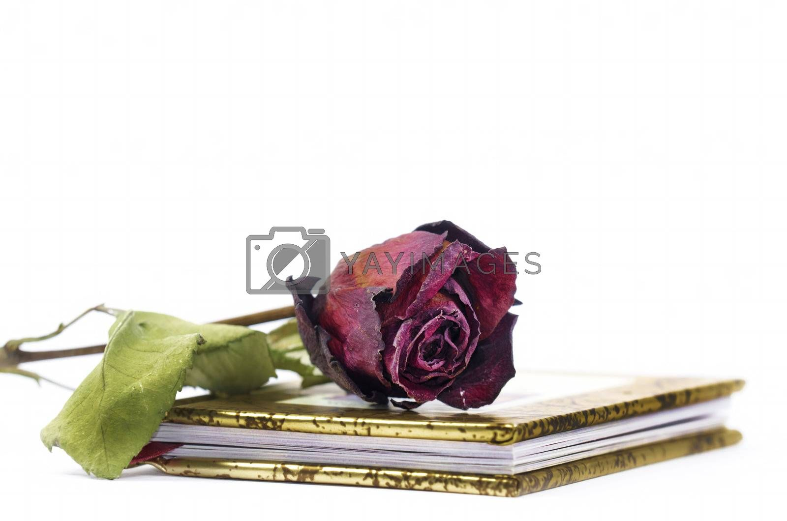 a red faded rose on a book