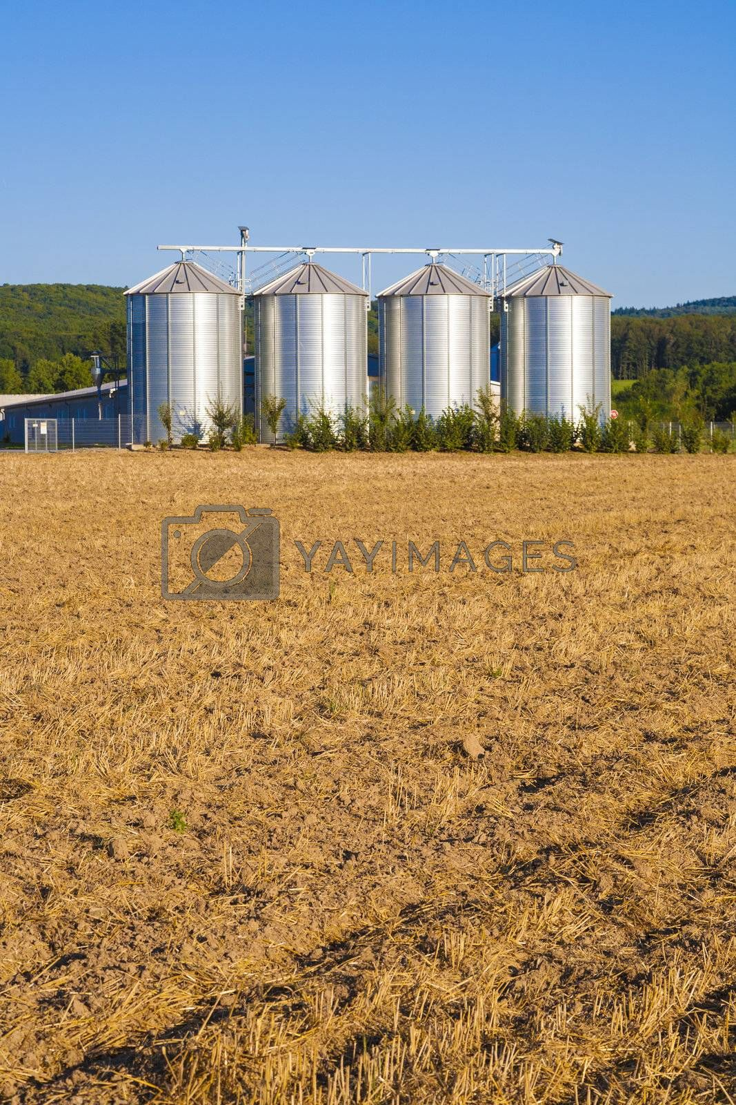 golden corn field in harvest with silo