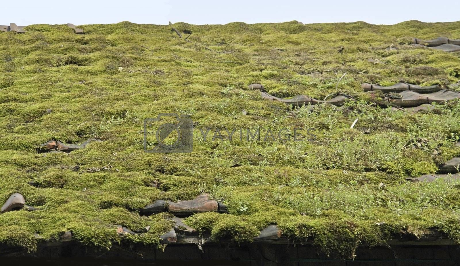 detail of a overgrown old roof in horizontal view