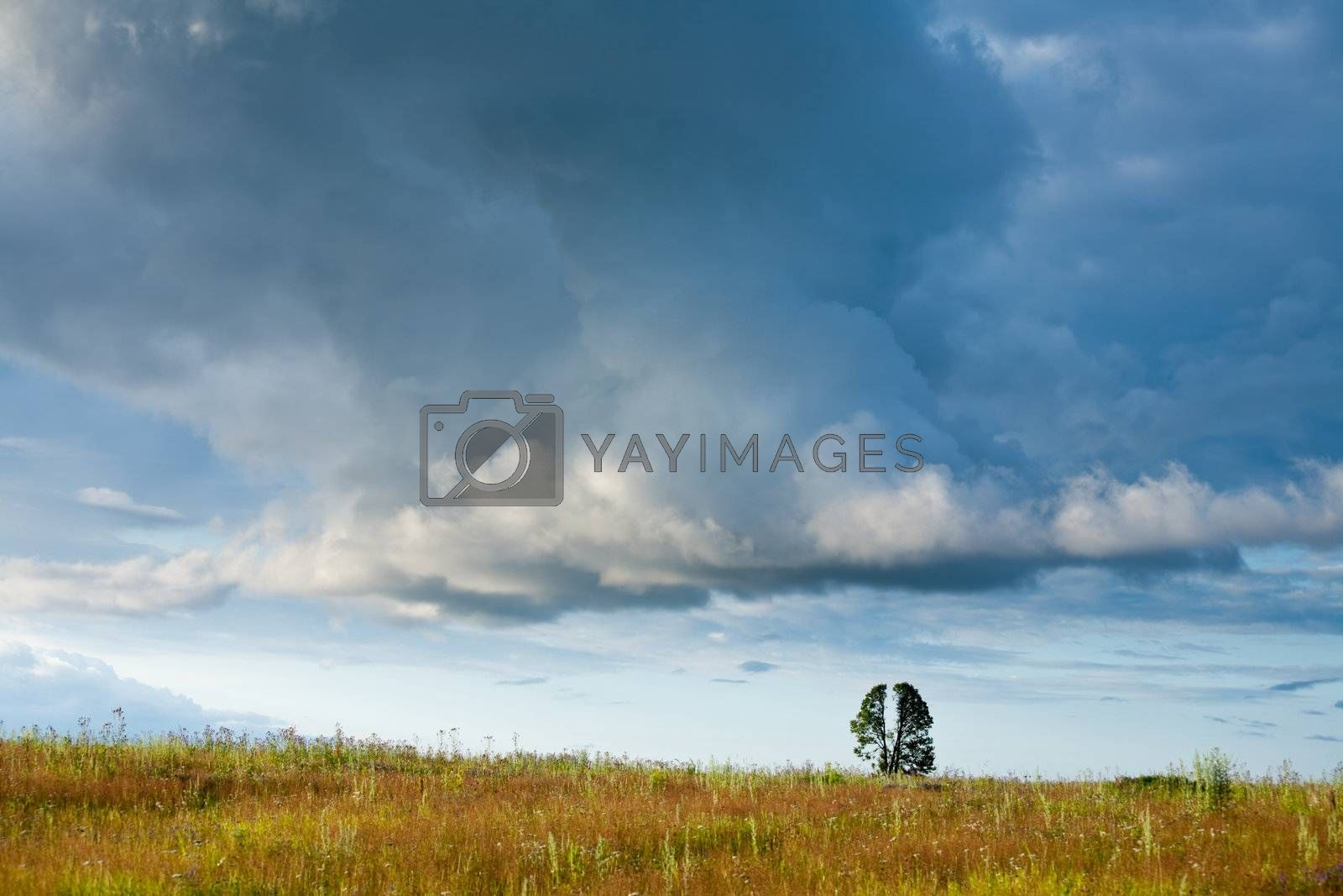 Dramatic sky under a field with tree at sunset