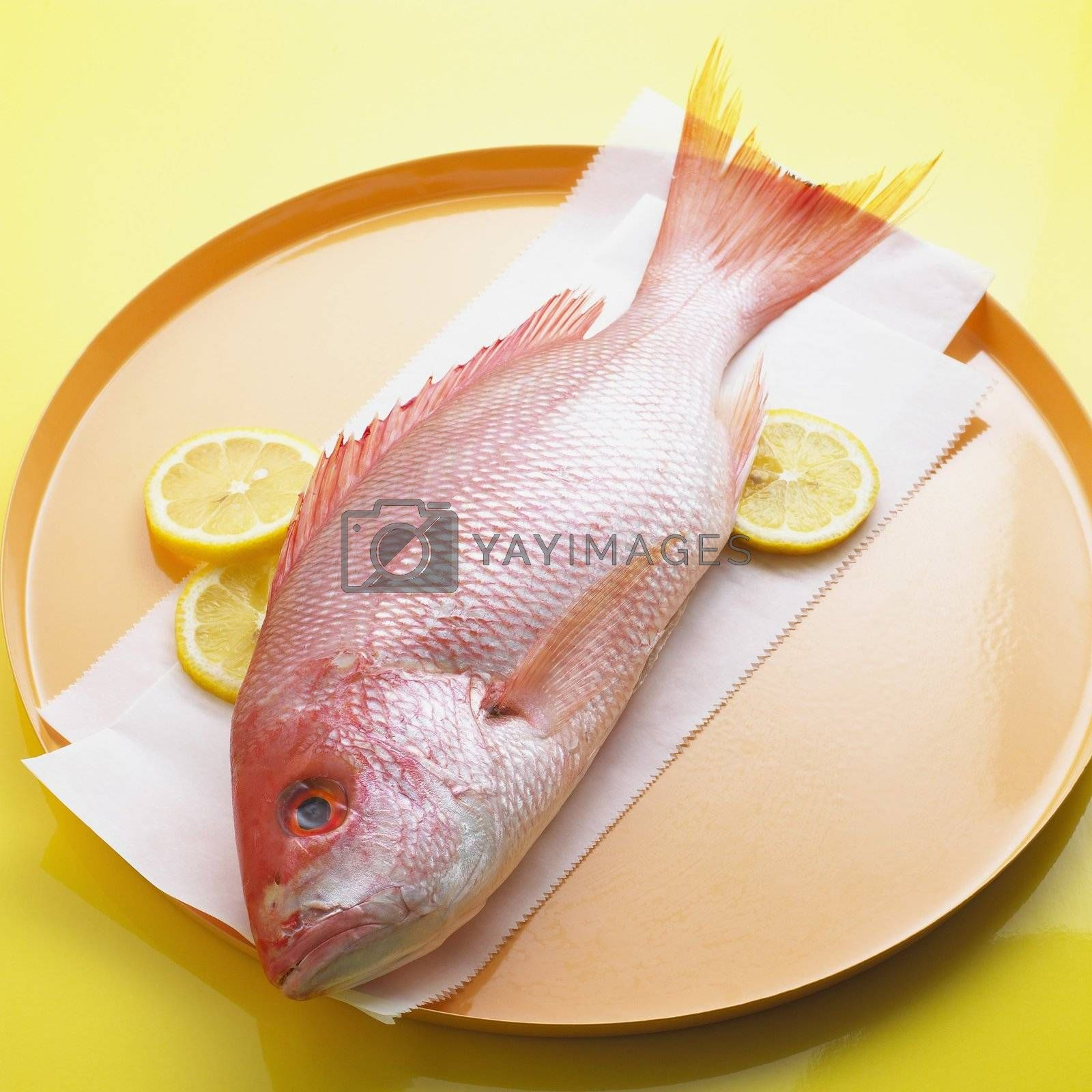 Whole Red Snapper