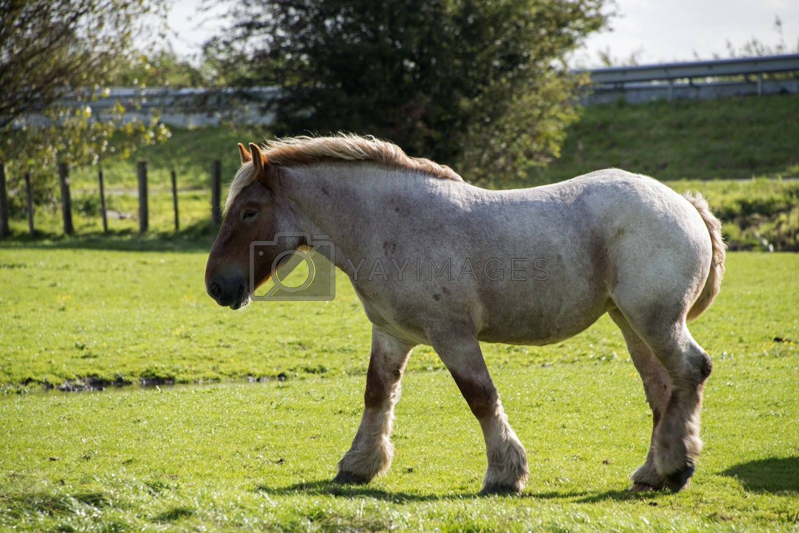 Light Brown Horse Royalty Free Stock Image Stock Photos Royalty Free Images Vectors Footage Yayimages