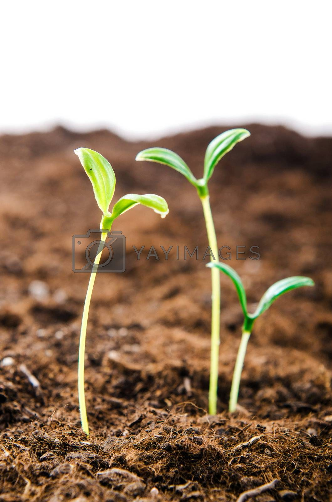 Green seedlings in new life concept by Elnur