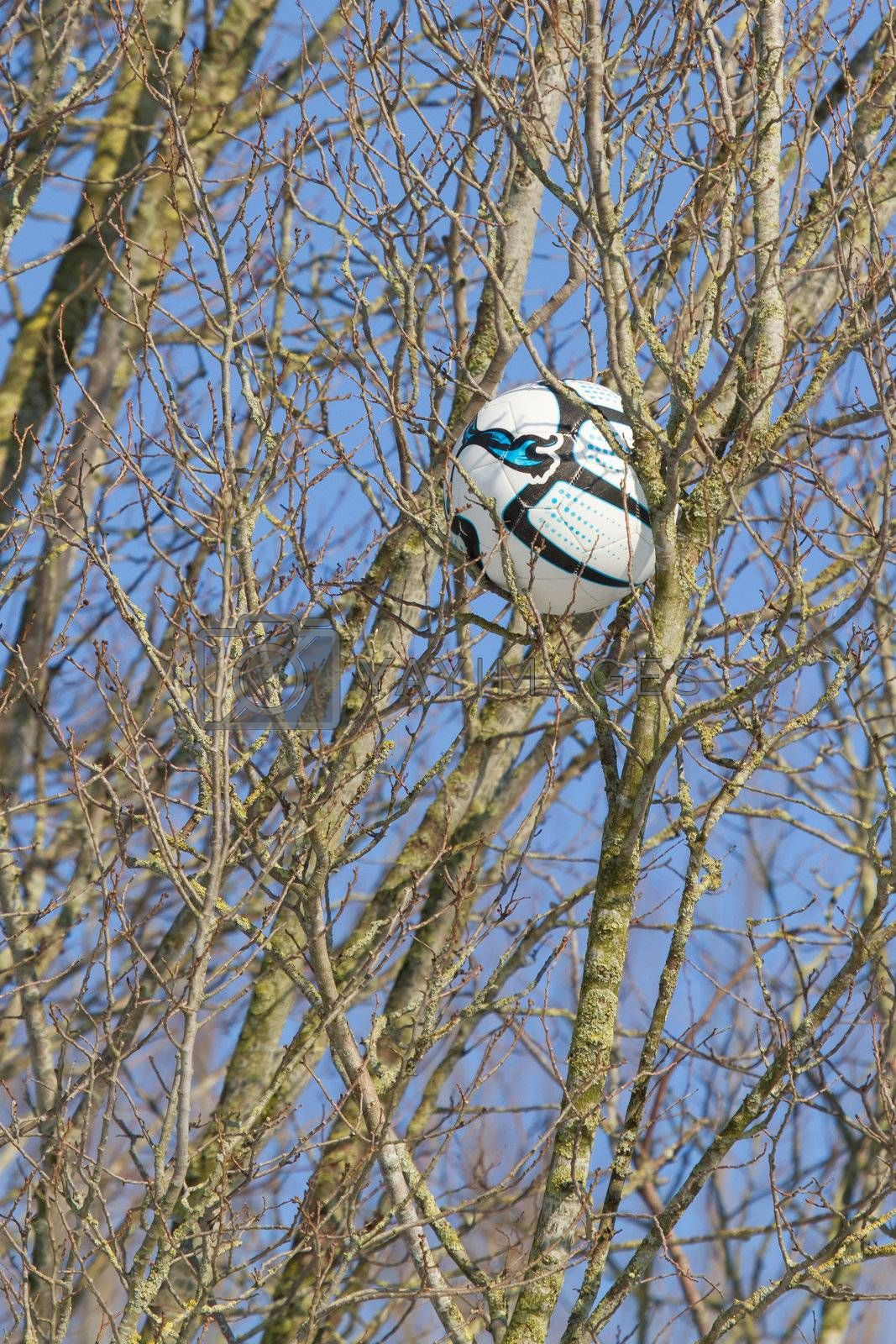 A football in a tree