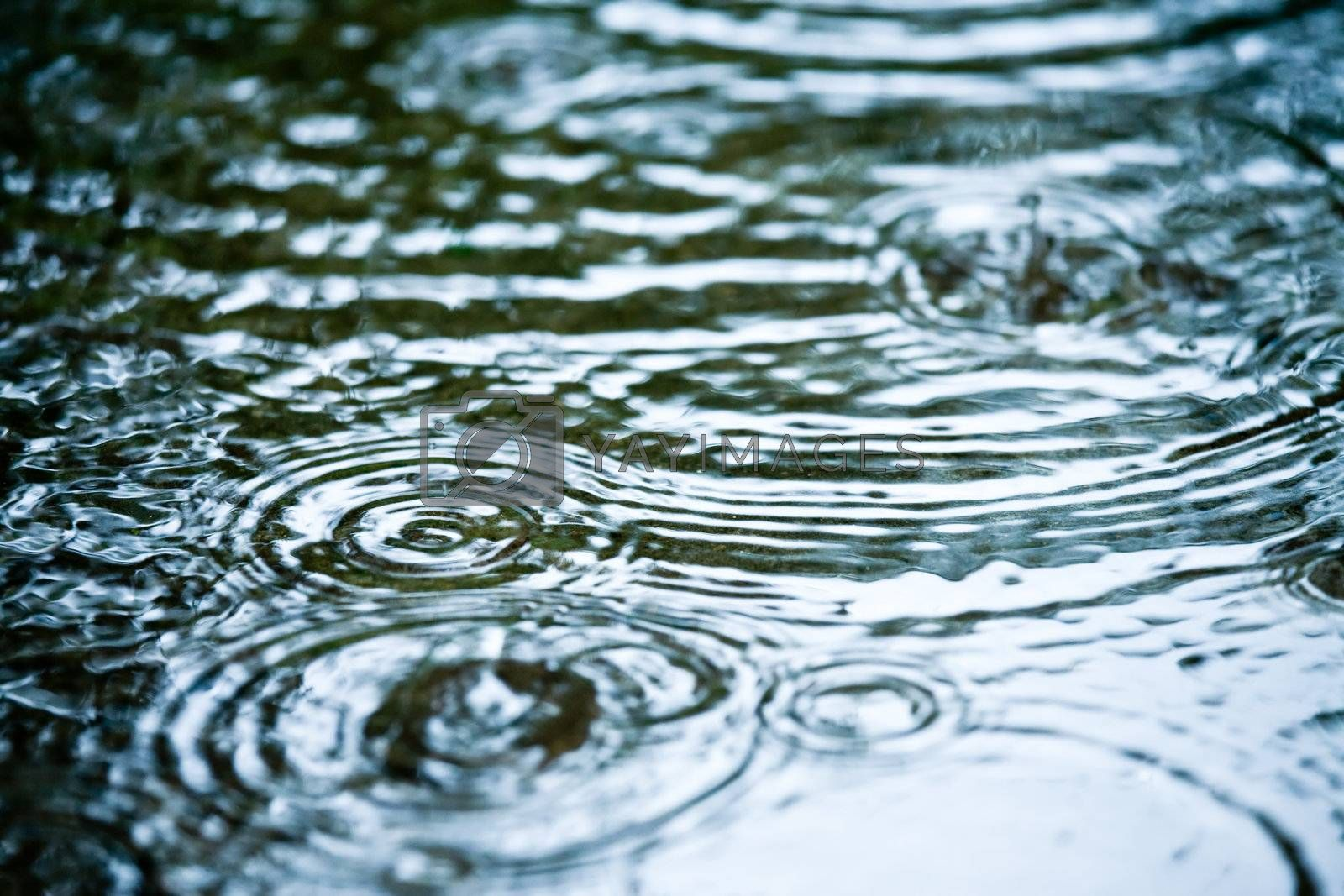 Rain drops rippling in a puddle