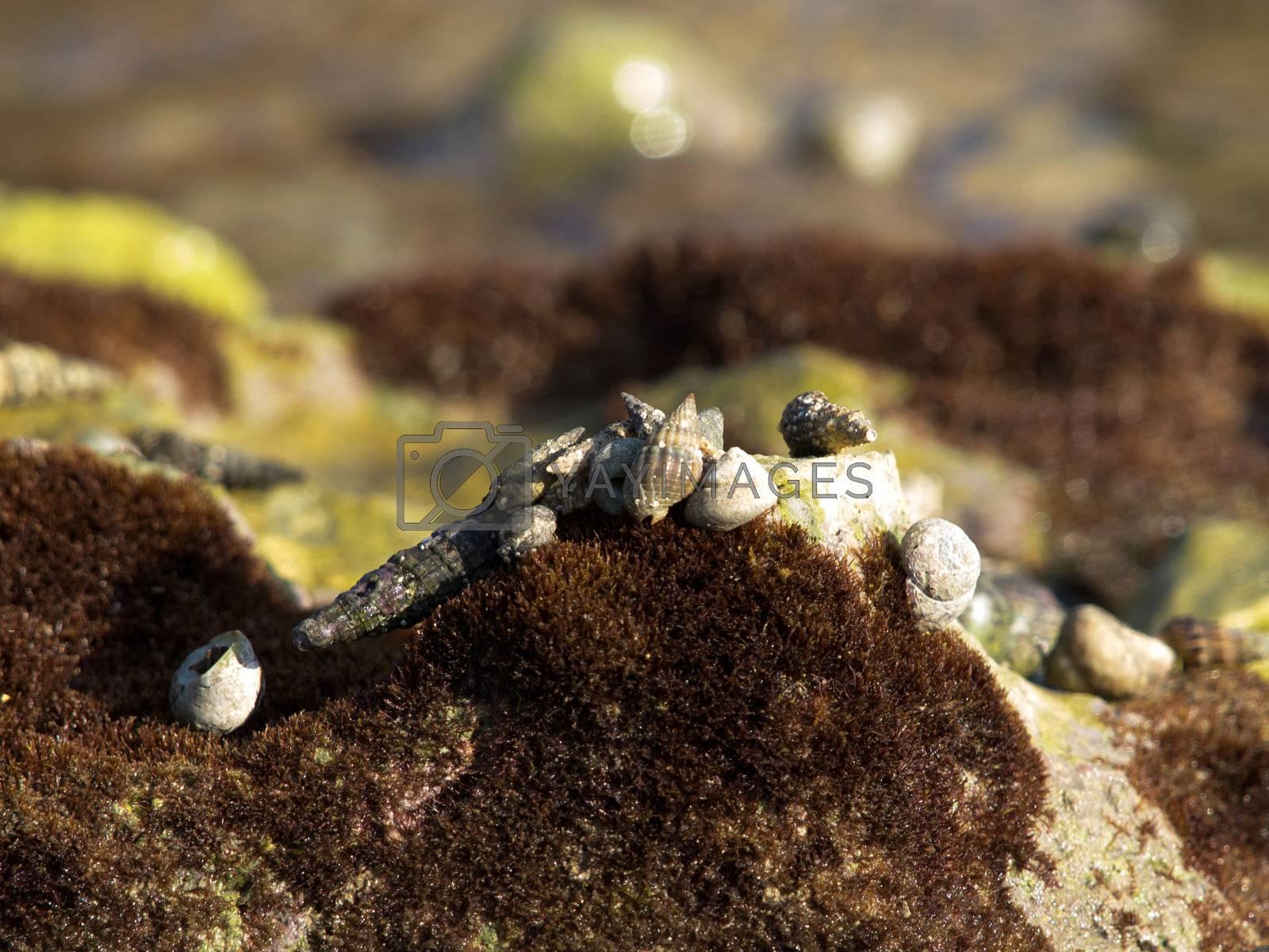 shell on the coast of the sea