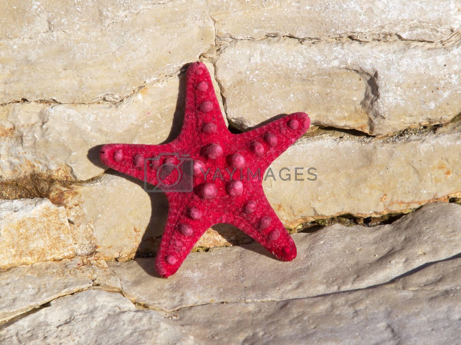red starfish on the stone coast