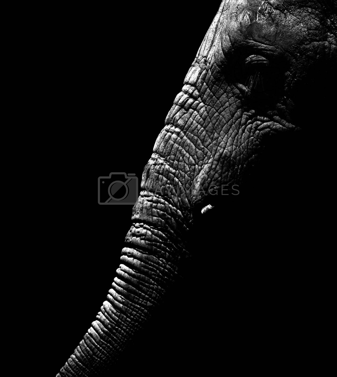 Elephant by alistaircotton