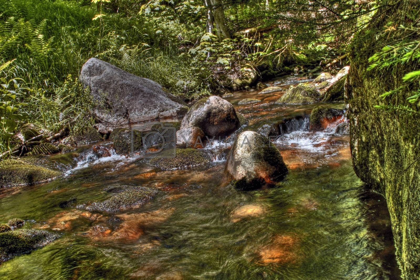 Creek flowing through a forest with rocks and moss