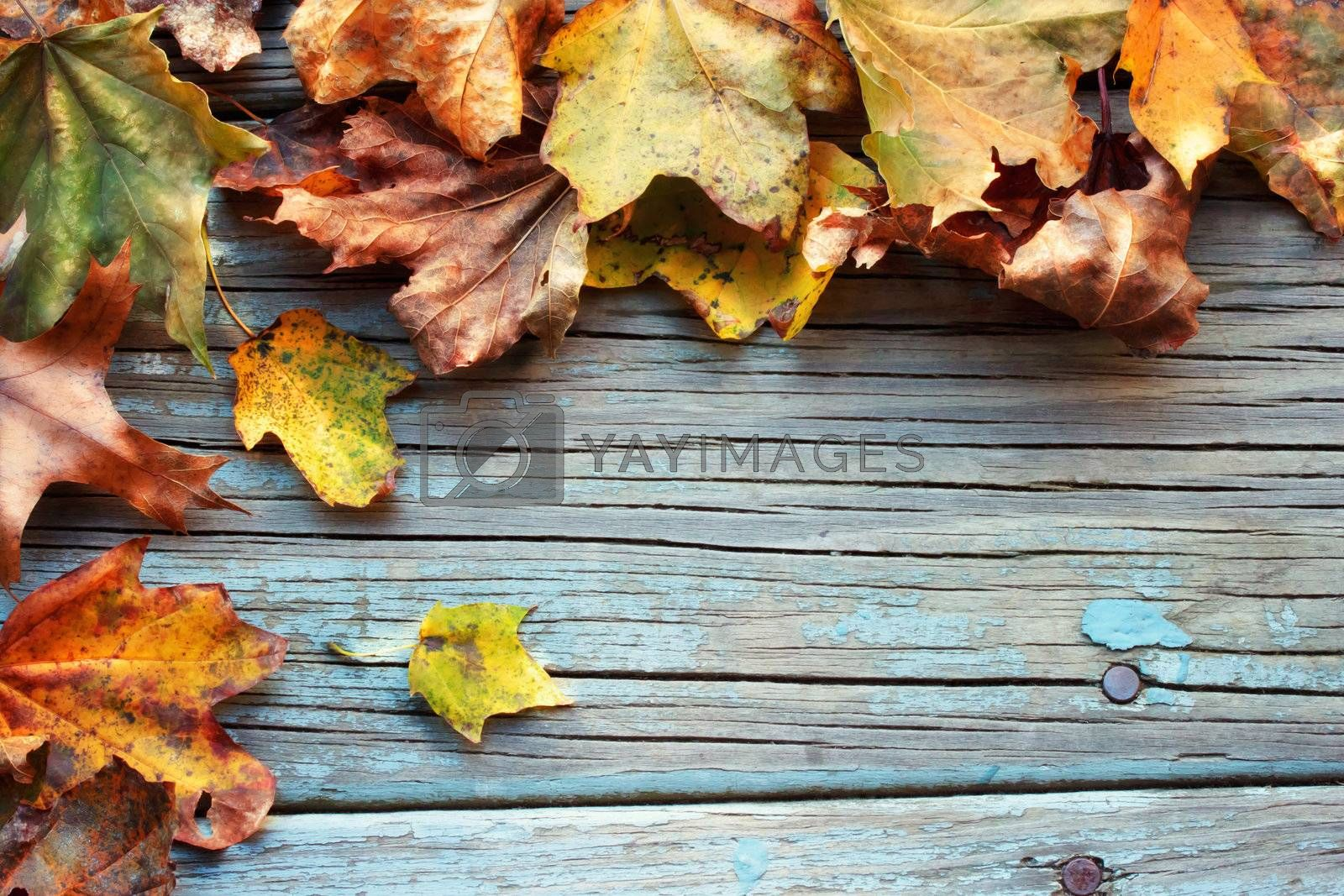 Autumn leaves on wooden board