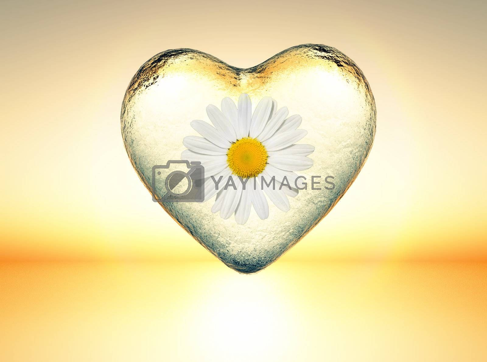 icy heart with a daisy inside